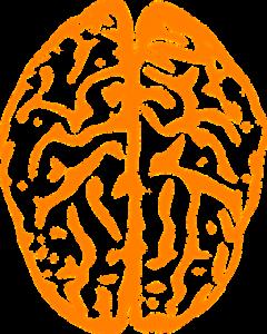 brain vektor orange